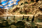 Penguins, Loro Parque, Tenerife, Canary Islands, 2007 Photographic Print by Peter Thompson