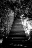 China 10MKm2 Collection - Stairway in the Forest Photographic Print by Philippe Hugonnard
