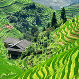 China 10MKm2 Collection - Rice Terraces - Longsheng Ping'an - Guangxi Photographic Print by Philippe Hugonnard