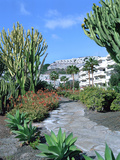 Cactus Garden, Puerto Rico, Gran Canaria, Canary Islands Photographic Print by Peter Thompson