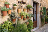 Potted Plants on the Wall of a House, Valldemossa, Mallorca, Spain Photographic Print by Peter Thompson