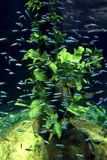 Aquarium, Loro Parque, Tenerife, Canary Islands, 2007 Photographic Print by Peter Thompson
