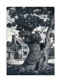 The Stricken Oak, 1937, (1938) Reproduction procédé giclée par Joan Hassall