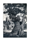 The Stricken Oak, 1937, (1938) Giclee Print by Joan Hassall