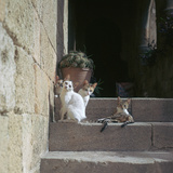 Kittens in Rhodes Old Town Reproduction photographique par CM Dixon