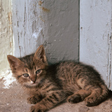 Kitten in Heracleion Photographic Print by CM Dixon