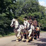 Tetley Shire Horses, Roundhay Park, Leeds, West Yorkshire, 1968 Photographic Print by Michael Walters