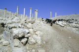 Ruins of the Ancient City of Pella, Jordan Photographic Print by Vivienne Sharp