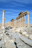 Upper Colonnade Street, Palmyra, Syria Photographic Print by Vivienne Sharp