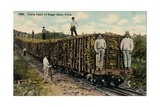 Train Load of Sugar Cane Leaving the Field, Cuba, 1915 Giclee Print