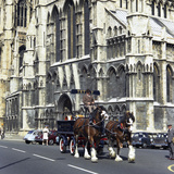 Tetley Shire Horses Outside York Minster, North Yorkshire, 1969 Photographic Print by Michael Walters