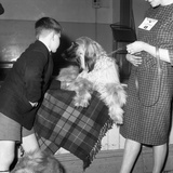 Child with an Afghan Hound at a Dog Show in Horden, County Durham, 1963 Photographic Print by Michael Walters