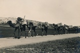 A Camel Train Bound for Damascus, 1936 Photographic Print