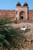 Buland Darwaza, Fatehpur Sikri, Agra, Uttar Pradesh, India Photographic Print by Vivienne Sharp