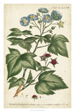 Chambray Botanical I Giclee Print by Phillip Miller