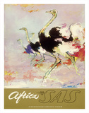 Africa - African Ostriches - SAS Scandinavian Airlines System Giclée-tryk af Otto Nielsen