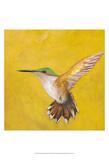 Sweet Hummingbird II Poster by Mehmet Altug