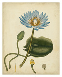 Blue Water Lily Giclee Print by Henry Andrews