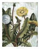 Dandelion Patina I Giclee Print by Naomi McCavitt