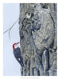 Red Bellied Woodpecker I Giclee Print by Fred Szatkowski