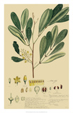 Descubes Foliage & Fruit IV Giclee Print by A. Descubes
