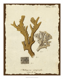 Natura Coral I Giclee Print by Johann Esper