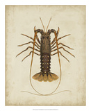 Crustaceans II Giclee Print by James Sowerby
