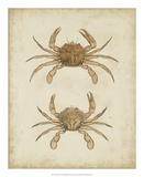 Crustaceans VI Giclee Print by James Sowerby