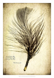 Feather on the Wind II Giclee Print by Honey Malek