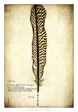 Feather on the Wind V Giclee Print by Honey Malek
