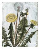 Dandelion Patina II Giclee Print by Naomi McCavitt