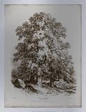 Sepia Sycamore Tree Premium Giclee Print by George Barnard