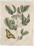 Embellished Catesby Butterfly & Botanical II Posters by Mark Catesby