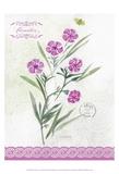 Flower Study on Lace III Prints by Elissa Della-piana