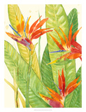 Watercolor Tropical Flowers III Giclee Print by Tim OToole