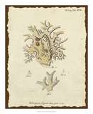 Natura Coral VI Giclee Print by Johann Esper