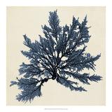 Coastal Seaweed IX Giclee Print by Vision Studio