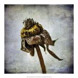 Grunge Remnants VII Prints by Honey Malek