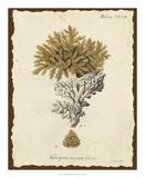 Natura Coral III Giclee Print by Johann Esper
