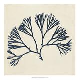 Coastal Seaweed VI Giclee Print by Vision Studio