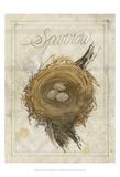 Nest - Sparrow Poster by Elissa Della-piana