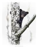 Bears at Play V Art by  PHBurchett