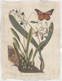 Embellished Catesby Butterfly & Botanical IV Posters by Mark Catesby