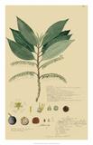 Tropical Descubes III Giclee Print by A. Descubes