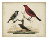 Red & Green Tanager Impression giclée par Friedrich Strack