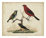 Red & Green Tanager Giclee Print by Friedrich Strack