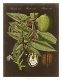 Walnut on Suede Giclee Print by Vision Studio