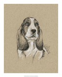 Breed Sketches VI Giclee Print by Ethan Harper