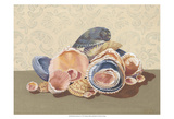 Shell Collection I Posters by Dianne Miller