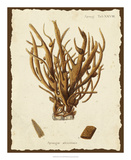 Natura Coral V Giclee Print by Johann Esper